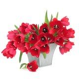piękna czerwieni tulipan Obrazy Royalty Free