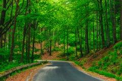 Piękna droga w lesie Obraz Stock
