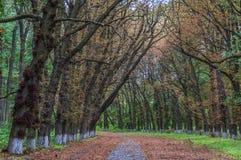Piękna droga w parku fotografia stock