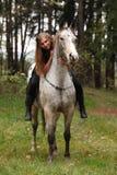 Piękna dziewczyna jedzie konia bez uzdy lub comberu Fotografia Royalty Free
