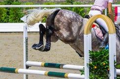 Piękna dziewczyna na szarym koniu w doskakiwania przedstawieniu, equestrian sporty Fotografia Stock