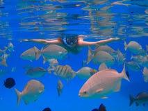 Piękna dziewczyna snorkeling Obrazy Stock