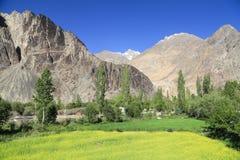 Piękna góra z musztardy polem przy Nubra dolinny Leh India Zdjęcia Royalty Free