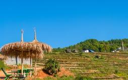 Piękna herbaciana plantacja przy doi angkhang Zdjęcie Stock