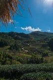 Piękna herbaciana plantacja przy doi angkhang, Chiang mai Zdjęcia Royalty Free