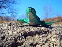 Piękna jaszczurki zabawka Zdjęcie Stock