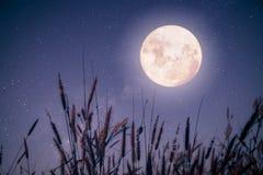 Piękna jesieni fantazja Fotografia Royalty Free