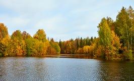 Piękna jesieni forestin woda Fotografia Royalty Free