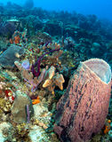 Piękna Karaiby rafa Obraz Royalty Free
