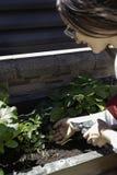 Pi?kna kobieta bierze opiek? miastowy warzywo ogr?d obrazy stock