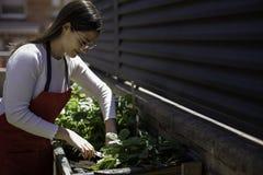 Pi?kna kobieta bierze opiek? miastowy warzywo ogr?d zdjęcia royalty free
