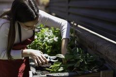 Pi?kna kobieta bierze opiek? miastowy warzywo ogr?d fotografia stock