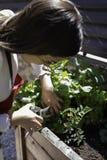 Pi?kna kobieta bierze opiek? miastowy warzywo ogr?d obraz stock