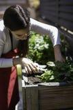 Pi?kna kobieta bierze opiek? miastowy warzywo ogr?d zdjęcie royalty free