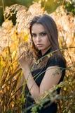 Piękna kobieta w polu przy zmierzchem Obraz Stock