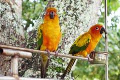 Piękna kolorowa papuga w ogródzie Obrazy Royalty Free