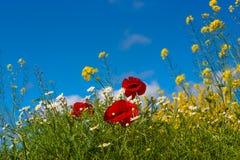 piękna krajobrazowa wiejska wiosna zdjęcie royalty free