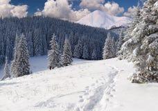 piękna krajobrazowa zima Zdjęcia Stock