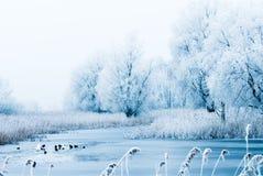 piękna krajobrazowa zimy. Zdjęcia Stock