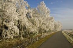 piękna krajobrazowa zimy. Zdjęcia Royalty Free