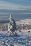 piękna krajobrazowa zimy. Zdjęcie Stock