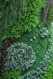 Piękna kwiat mozaika Zdjęcia Stock