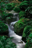 piękna lasowa siklawa Zdjęcia Stock