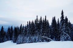 piękna lasu krajobrazu zima Góra w dymny Karpackim, Obraz Royalty Free
