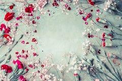 Piękna lato ogródu kwiatów rama na pastelowym tle Obraz Stock