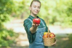 Pi?kna m?oda kobieta podnosi dojrza?ych organicznie jab?ka w koszu w ogr?dzie na gospodarstwie rolnym w lub letnim dniu lub jesie obraz royalty free