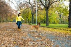 Pi?kna m?oda kobieta z jej psem w parku obrazy royalty free