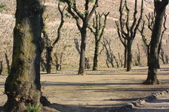 Piękna natura w Siena, Italy Fotografia Royalty Free