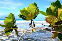 Piękna natura Zanzibar Obrazy Stock
