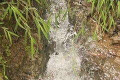 Piękna Naturalna sceneria w lesie obrazy royalty free