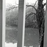 pi?kna natury osobliwo?? zakorzenia drzewa obraz stock