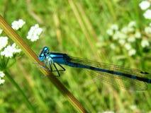 Piękna natury scena z motylem Zdjęcie Stock