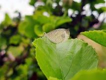 Piękna natury scena z motylem, Zdjęcie Royalty Free