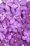Piękna orchidea Obrazy Royalty Free