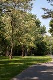 Piękna parkowa scena zdjęcie royalty free