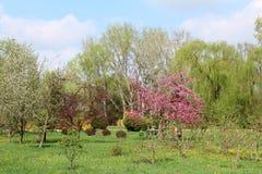 piękna parkowa wiosna Obraz Stock