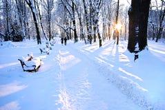 piękna parkowa zima Fotografia Stock