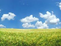 piękna pola pszenicy Zdjęcia Royalty Free