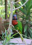 Piękna ptasia papuga Fotografia Royalty Free