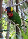 Piękna ptasia papuga Zdjęcia Royalty Free