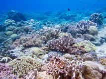 Piękna rafa koralowa przy Bunaken Fotografia Royalty Free