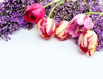 Piękna rama bzy i tulipany dla kartka z pozdrowieniami z miejscem twój tekst Obrazy Stock