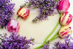 Piękna rama bzy i tulipany dla kartka z pozdrowieniami z miejscem twój tekst Obraz Royalty Free