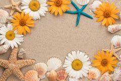 Piękna rama chamomiles, denne skorupy, denne gwiazdy na piasku Zdjęcie Royalty Free