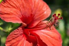 piękna relaksu skincare wiosna wellness obrazy royalty free