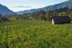 Piękna sceneria Cemoro Lawang wioska w ranku, Bromo m Zdjęcia Stock